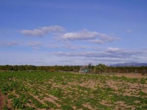 2009 Museros en febrero