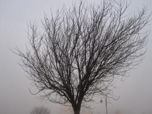 2010 Niebla